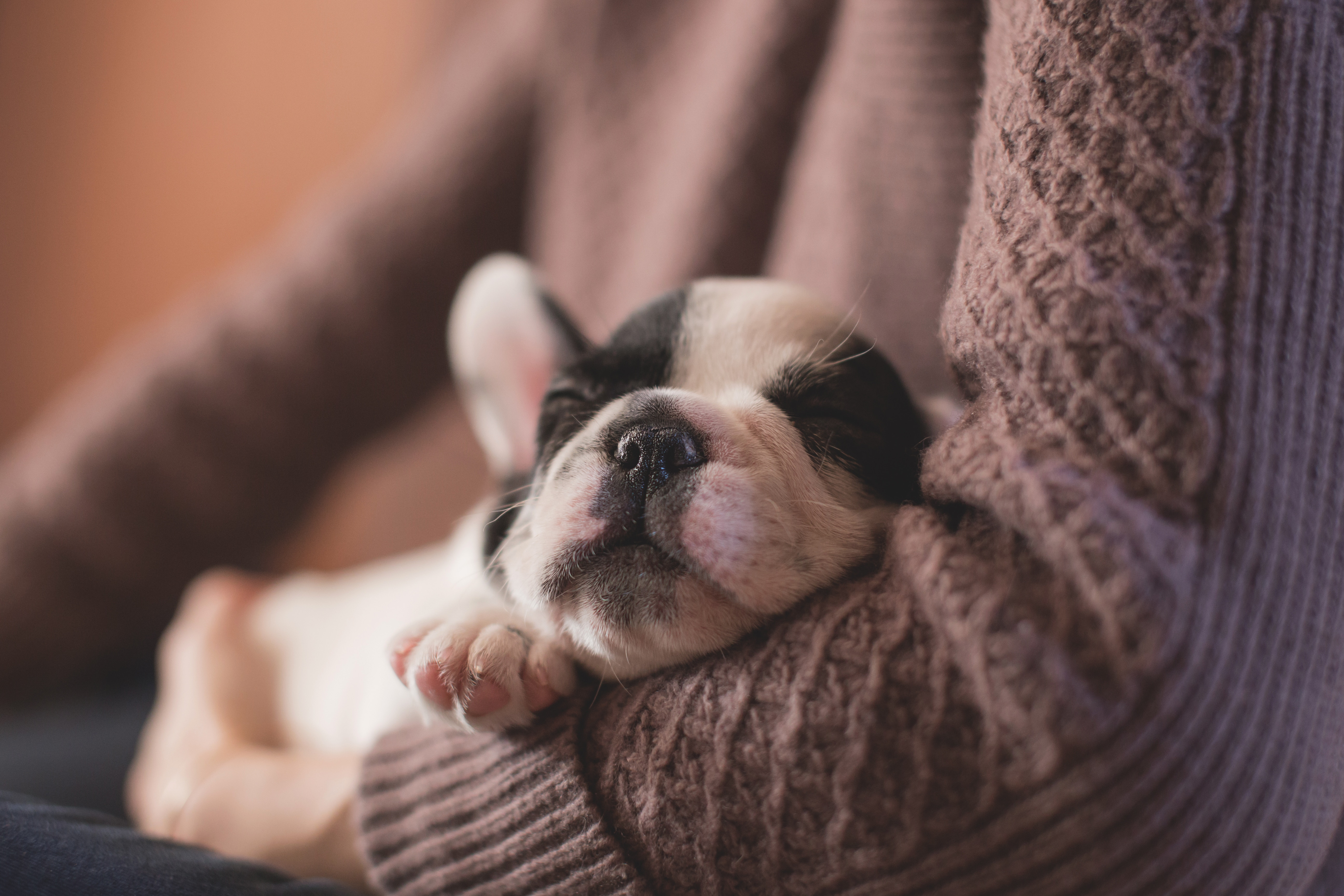 A small puppy sleeps in the crook of a person's elbow.
